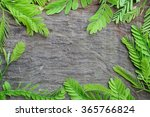 black wood texture with... | Shutterstock . vector #365766824