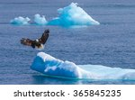 Bald Eagle Landing On Iceberg