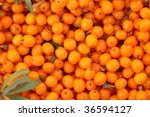 Background from sea-buckthorn berries (Hippophae rhamnoides). This product contain the plenty of vitamin C - stock photo