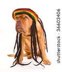 Stock photo funny dog in rastafarian hat with dreadlocks 36603406