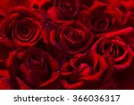 Dark Red Roses Flower...
