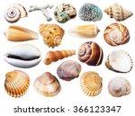 Set Of Various Mollusk Shells...