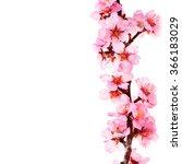 almond blossoms. almond tree... | Shutterstock . vector #366183029