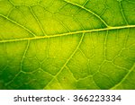 The Surface Of The Leaf Of The...