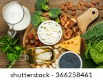 foods rich in calcium such as... | Shutterstock . vector #366258461