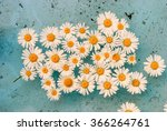 daisies on the water surface in ... | Shutterstock . vector #366264761