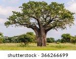 baobab tree in the tarangire... | Shutterstock . vector #366266699