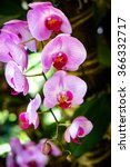 orchids are always colorful and ... | Shutterstock . vector #366332717