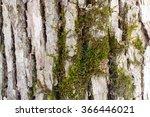 green moss on the bark   Shutterstock . vector #366446021