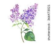 spring flower  twig purple...   Shutterstock . vector #366473021