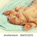 Stock photo portrait of little kitten with paws up sleeping on the back 366513251