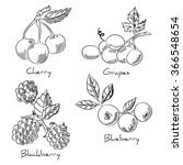 hand drawing set of berries. | Shutterstock .eps vector #366548654