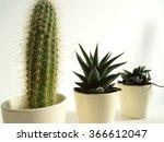 three cactusses in flower pots | Shutterstock . vector #366612047