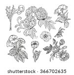 collection of hand drawn... | Shutterstock .eps vector #366702635