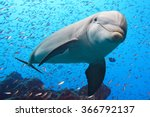 dolphin underwater on reef... | Shutterstock . vector #366792137
