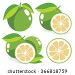 vector grapefruits. whole and... | Shutterstock .eps vector #366818759