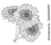 elegant decorative gerbera...   Shutterstock .eps vector #366846695