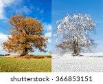 Alone Tree On Two Season ...