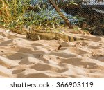 Lizard On The Sand Of Lake In...