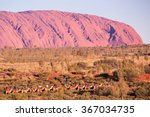 Majestic Uluru And A Camel Tou...