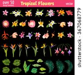 Stock vector tropical flowers design elements set vintage colorful style in vector 367068779