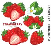 strawberry on white background. ... | Shutterstock .eps vector #367135394