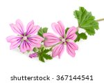 mallow sprig with leaves and... | Shutterstock . vector #367144541