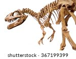 Dinosaur Skeleton Over White...