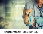dog veterinarian. | Shutterstock . vector #367204637