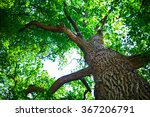 forest trees nature green wood... | Shutterstock . vector #367206791