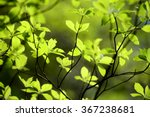 Green Foliage In Japan During...