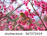 Bird Oriental White Eye Birds...