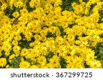 The Yellow Flowers  Background...