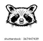 vector illustration   raccoon... | Shutterstock .eps vector #367447439