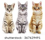 Three Cute Cats  Isolated On...