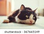 cat lying on rug. | Shutterstock . vector #367665149
