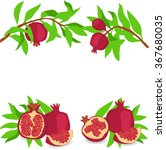 pomegranate. set. vector... | Shutterstock .eps vector #367680035
