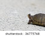 Stock photo turtle with fly on nose 36775768
