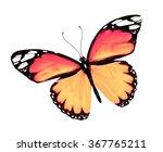 Stock photo orange butterfly isolated on white background 367765211