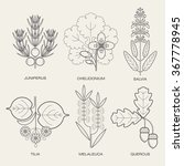 set of vector illustrations of... | Shutterstock .eps vector #367778945