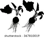 illustration with beet... | Shutterstock .eps vector #367810019