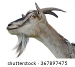 Goat's Head Isolated On White...