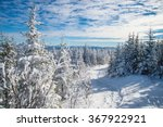Beautiful Snowy Landscape In...