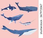set of geometric pantone whales ... | Shutterstock . vector #367972067