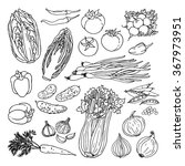 doodle vector illustration of... | Shutterstock .eps vector #367973951