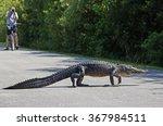 Shark Valley  Florida  Usa   9...