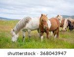 Icelandic Horses. The Icelandic ...