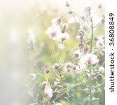 autumn grass background - stock photo