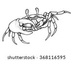 hand drawn line art crab | Shutterstock .eps vector #368116595