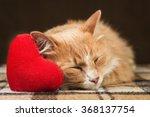 Red Fluffy Cat Asleep Hugging...